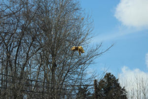 Tornado Damage in Putnam County 3-3-20 by David-113
